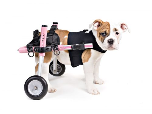 Walkin\' Wheels Dog Wheelchairs — Animal Physiotherapy Products
